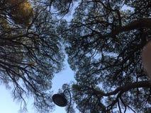 Lampa wśród treetops fotografia royalty free