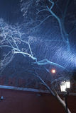 Lampada di via leggera durante la tempesta della neve Immagine Stock Libera da Diritti