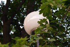 Lampada di via rotonda sul fondo della natura dell'albero fotografia stock libera da diritti