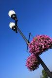 Lampada e fiore di via Immagine Stock Libera da Diritti
