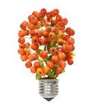 Lampada economizzatrice d'energia di eco Fotografia Stock Libera da Diritti