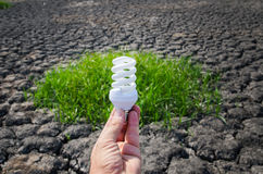 Lampada economizzatrice d'energia a disposizione Fotografia Stock