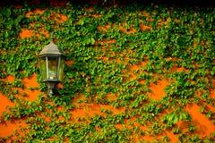 Lampada elettrica d'annata della lanterna che appende con l'edera su concret arancio immagine stock