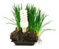 Lampada, erba e terra economizzarici d'energia Fotografia Stock