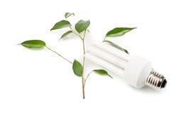 Lampada fluorescente economizzatrice d'energia e un ramoscello verde Fotografia Stock