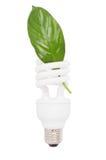 Lampada fluorescente per conservare elettricità e da pulire ecologicamente. immagini stock libere da diritti