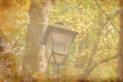 Lampada leggera della città vicino all'alberi immagini stock libere da diritti