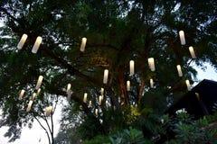 Lampada sul tempo di penombra dell'albero Immagine Stock Libera da Diritti