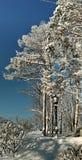 Lampadaire sur un fond des arbres nus Photo stock