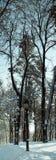 Lampadaire sur un fond des arbres nus Photographie stock libre de droits
