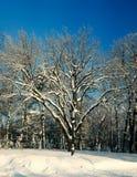 Lampadaire sur un fond des arbres nus en hiver Photos stock