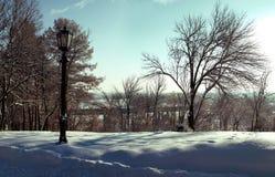 Lampadaire sur un fond des arbres nus en hiver Photos libres de droits