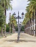 Lampadaires avec des palmiers Photos libres de droits