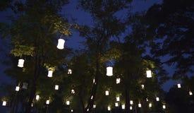 Lampade sotto gli alberi immagine stock