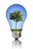 Lampadina con l'albero Fotografia Stock