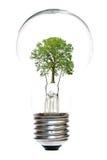Lampadina con l'albero all'interno immagine stock libera da diritti