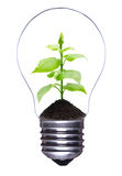 Lampadina con la pianta Fotografia Stock Libera da Diritti