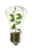 Lampadina con una pianta crescente dentro Immagine Stock