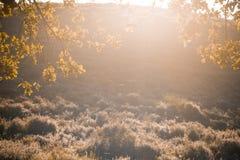 Lampadina d'autunno Fotografie Stock Libere da Diritti