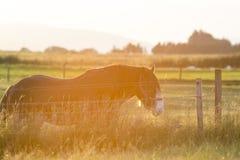Lampadina del cavallo Fotografia Stock