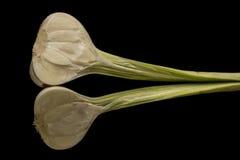 Lampadina dell'aglio Immagini Stock Libere da Diritti