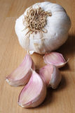 Lampadina dell'aglio fotografia stock libera da diritti