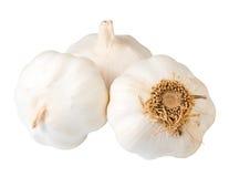 Lampadina dell'aglio Fotografie Stock