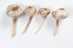 Lampadina dell'aglio isolata Fotografia Stock Libera da Diritti