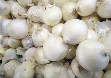 Lampadina della cipolla bianca nel deposito dell'agricoltore Fotografia Stock