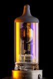 Lampadina della lampada allo xeno Immagine Stock