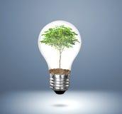 Lampadina della luce a incandescenza con la pianta Fotografia Stock