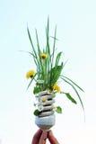 Lampadina di Eco con i fiori Fotografie Stock Libere da Diritti