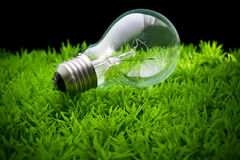 Lampadina di Ligh su erba verde Fotografia Stock Libera da Diritti