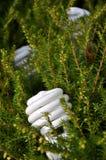 Lampadina economizzatrice d'energia Fotografie Stock Libere da Diritti