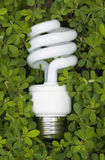 Lampadina economizzatrice d'energia verde Immagini Stock