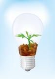 Lampadina elettrica Fotografie Stock