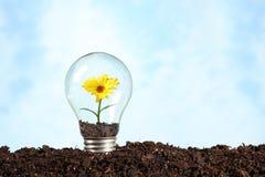 Lampadina elettrica su terra con il fiore Fotografia Stock Libera da Diritti