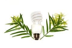 Lampadina fluorescente compatta Fotografia Stock Libera da Diritti