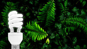 Lampadina fluorescente sulla foglia verde tropicale Immagini Stock Libere da Diritti