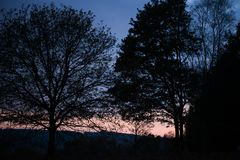 Lampadina Forest During Fall Season Fotografia Stock Libera da Diritti