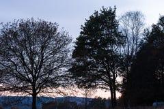 Lampadina Forest During Fall Season Fotografie Stock