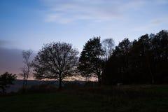 Lampadina Forest During Fall Season Immagini Stock
