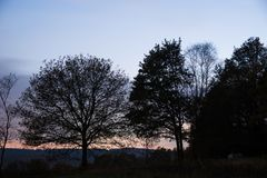 Lampadina Forest During Fall Season Immagine Stock Libera da Diritti