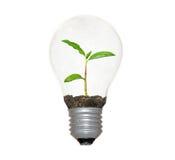 Lampadina incandescente con planat come filamento Fotografia Stock Libera da Diritti