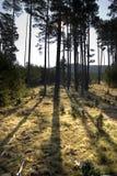 Lampadina nella foresta Fotografie Stock