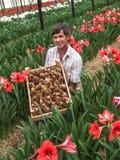 Lampadine dei fiori Fotografie Stock Libere da Diritti