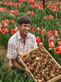 Lampadine dei fiori Fotografie Stock
