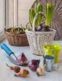 Lampadine dei fiori su un fondo dei canestri con le piante sulla t Fotografia Stock