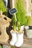 Lampadine del giacinto Fotografie Stock Libere da Diritti