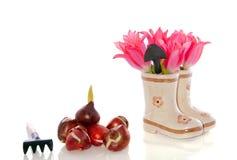 Lampadine del tulipano e fiori del tulipano fotografia stock
